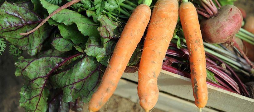 La coopérative bretonne Sica produit chaque année 230.000 tonnes de légumes.