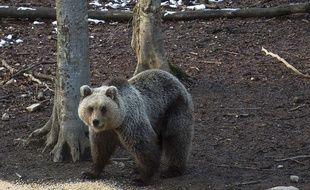 Illustration d'un ours slovène.
