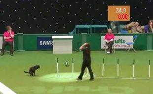 Capture d'écran d'une vidéo montrant un chien déféquer pendant une course d'agilité.