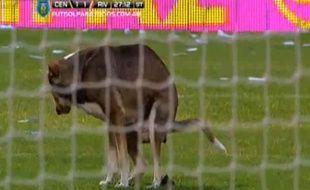Un chien errant pénètre sur la pelouse d'un match du championnat argentin et fait ses besoins dans la surface de réparation, le 16 février 2014.