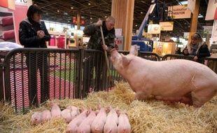 La France a perdu un million de cochons en dix ans et les deux tiers des exploitations porcines, au profit d'une forte concentration des élevages, selon une enquête du service statistique du ministère de l'Agriculture.