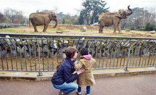 Les deux éléphants malades, Népal et Baby, étaient hier encore visibles de près.