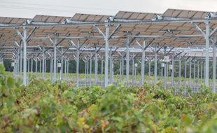 Au Domaine des Nidolères, près de Perpignan, des panneaux solaires ont été installés au-dessus de 4,5 ha de futures vignes. Un atout pour s'adapter au changement climatique?