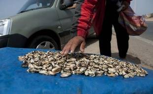 Des milliers de chômeurs foncent chaque matin sur le littoral atlantique marocain en particulier entre Rabat et Casablanca (ouest) pour collecter des tonnes de moules, une surexploitation qui menace l'écosystème marin de cette région très urbanisée, selon les experts.