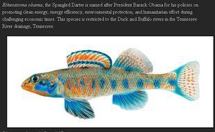 Capture d'écran du site du Tennessee Aquarium conservation institute, montrant le poisson Etheostoma obama.