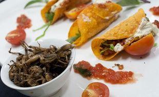Près de 1.400 espèces d'insectes sont consommées quotidiennement par 2,5 milliards d'humains