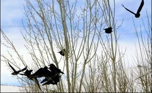 1er, 5 et 6 janvier 2006: décès en Turquie de trois frère et soeurs de Dogubeyazit (est). Ce sont les premiers morts hors d'Extrême-orient.