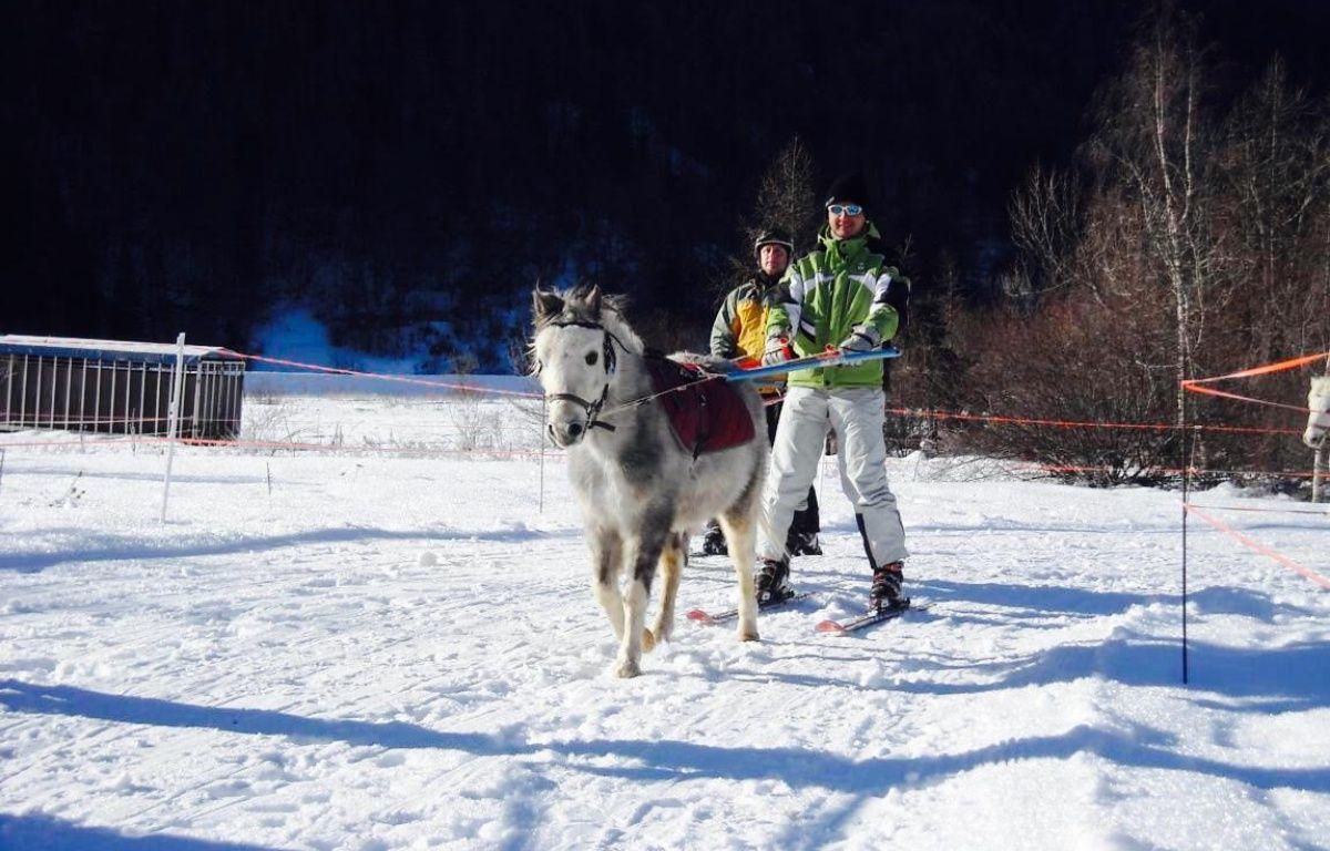 Le poney tracte un skieur dans le Champsaur. – OT Orcières.