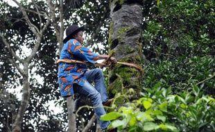 Le salaire est faible pour un travail qui exige de grimper au sommet d'un palmier, à 15 mètres du sol, sans filet de sécurité: pas étonnant que l'industrie du vin de palme ait du mal à trouver des recrues.