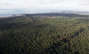 Avant la tempête Klaus, en janvier 2009, la forêt landaise compensait les émissions de CO2 de toute la région.