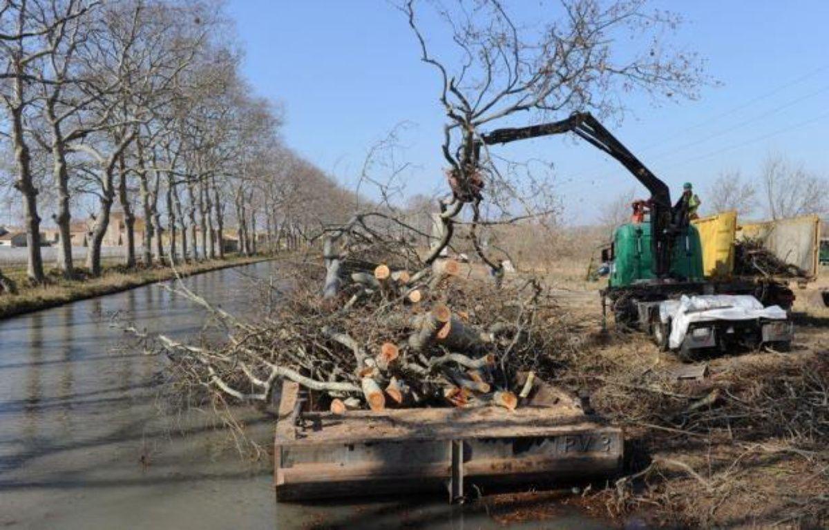 L'épineuse question du financement des replantations d'arbres le long du Canal du Midi, évaluées à 200 millions d'euros, pour remplacer des milliers de platanes malades, revient au premier plan à peine tournée la page des élections. – Pascal Guyot afp.com