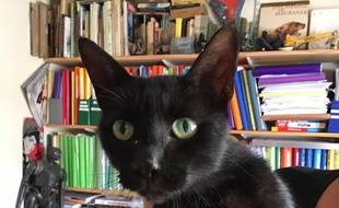 La chatte Pouss a retrouvé sa maîtresse, après dix ans d'errance dans les rues de Toulouse.