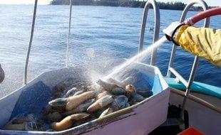 Palourdes royales pêchées près de Tofino, sur la côte pacifique canadienne