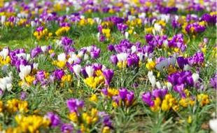 Les petites fleurs c'est aussi du concret pour la municipalité lilloise.