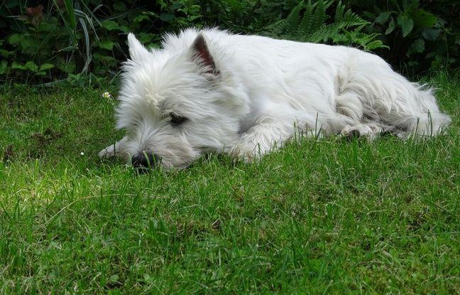 Russie: Un homme congèle son chien vivant