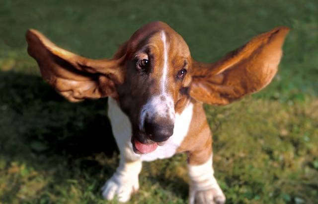 https://img.20mn.fr/5KidyY1gQ4CNOwcG5Tbscg/640x410_chiens-toutes-races-toutes-tailles-bienvenus-premiere-illustration.jpg