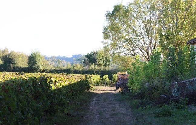 Le vignoble sur l'île Margaux, dans le Médoc, est d'une surface de 14 ha.