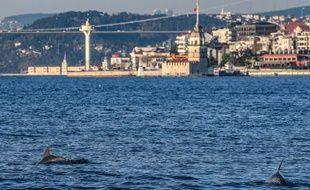 Des dauphins ont été aperçus dans le Bosphore