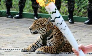 Un jaguar est exhibé lors du passage de la flamme olympique, à Manaus, dans le nord du Brésil, le 20 juin 2016