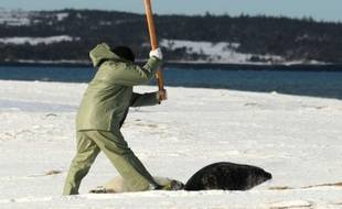 Un chasseur tue un phoque lors de la journée d'ouverture de la chasse à Hay Island, Canada, le 24 février 2011.