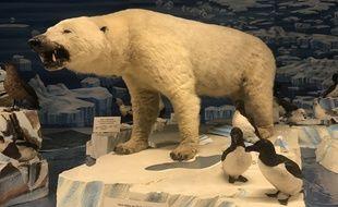 Le musée zoologique possède possède une des collections d'animaux naturalisés les plus riches de France.