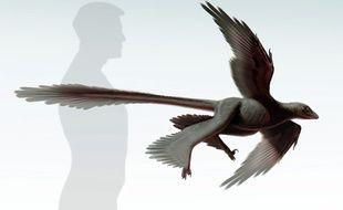 Image transmise par le Museum d'histoire naturelle de Los Angeles montrant un dinosaure à plumes, le Changyuraptor Yangi.