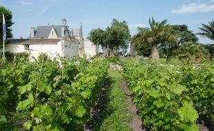 Le Château Pape Clement de Bernard Magrez pourrait s'associer à cette fête du vin. - Photo :  Sebastien Ortola