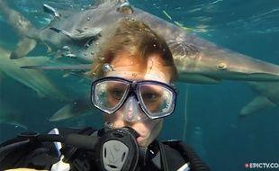 Aaron Gekoski au milieu des requins au large de l'Afrique du Sud