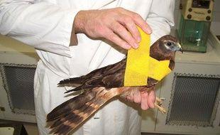 Le centre de soins des oiseaux sauvages du lyonnais a dû fermer ses portes pour une durée indéterminée.