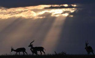 Des antilopes africaines dans un centre de recherche près de Rumuruti, au Kenya, le 30 janvier 2016
