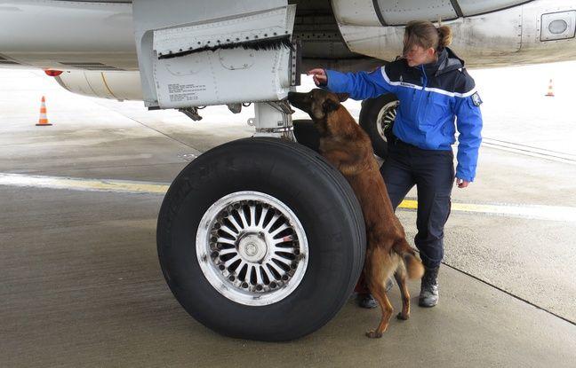 La gendarme Amandine Faivre et son chien Clavo, inspectent un avion avant le décollage, sur l'aéroport de Lille-Lesquin.