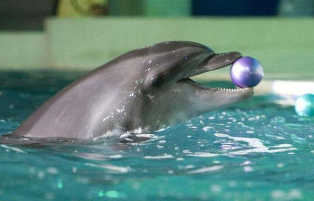 Un dauphin nage au Dolphinarium du Dubai Creek Park, le 28 octobre 2008.