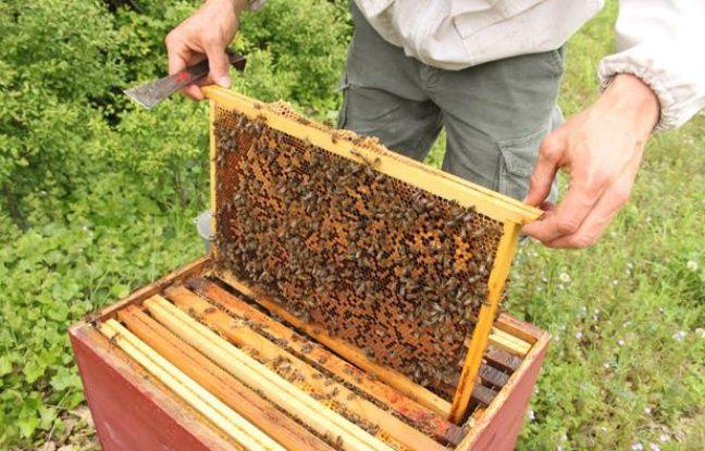 A l'intérieur de la ruche de 20minutes.fr, gérée par Un toit pour les abeilles, à Fouras (Charente-Maritime) le 11 mai 2012.
