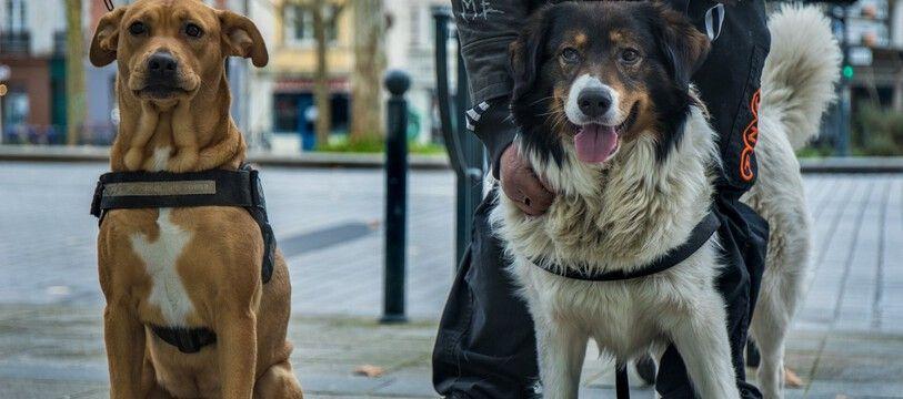 NE PAS REUTILISER. A Rennes, l'association Gamelles Pleines espère ouvrir une pension pour accueillir les chiens des personnes sans-abri.
