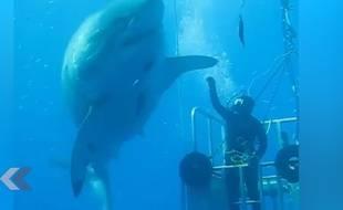 Un requin et un homme presque main dans la main