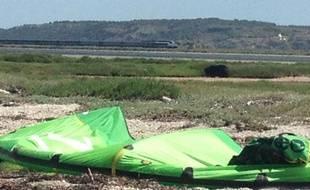 Au second plan de cette photographie prise près de l'étang de la Sèche (Aude) datée du 24 juin 2013, on aperçoit l'ourse Viviane qui a disparu la veille.
