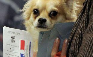 Un chien dans un bureau de vote.