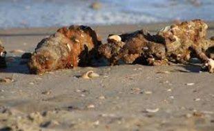 Obus découverts sur le littoral girondin.