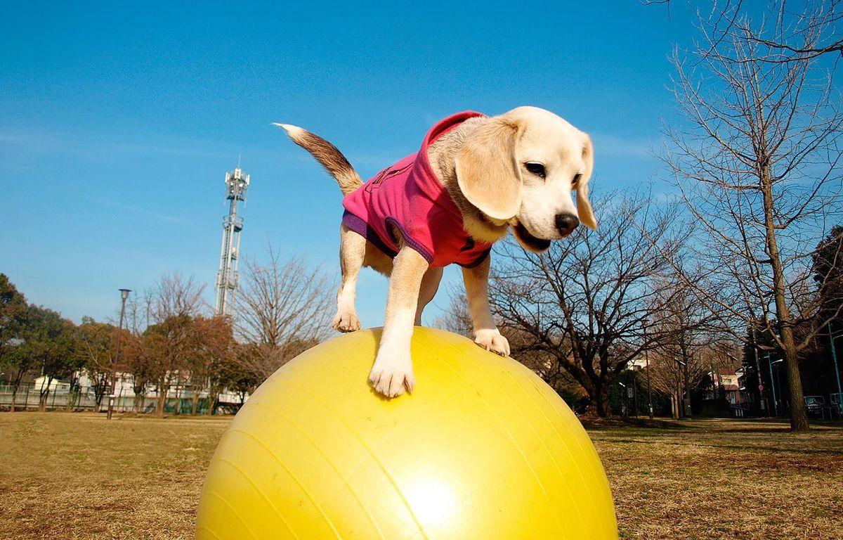 Ce mardi 29 mars, Purin a fait une entrée fracassante dans le célèbre Guinness book avec le record de vitesse sur ballon/ AFP PHOTO / Guinness World Records /  – AFP