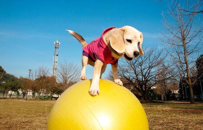 Ce mardi 29 mars, Purin a fait une entrée fracassante dans le célèbre Guinness book avec le record de vitesse sur ballon/ AFP PHOTO / Guinness World Records /