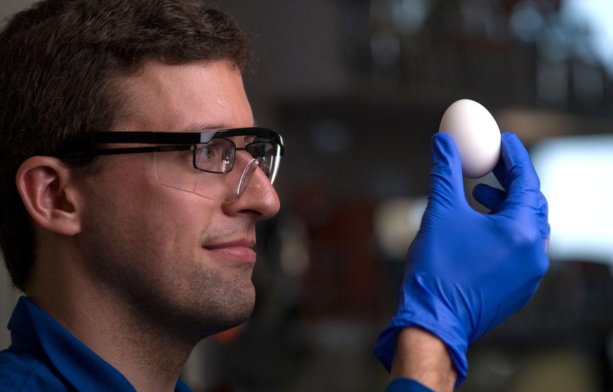 Des liens entre les protéines changent l'état d'un oeuf. – IRVINE UNIVERSITY