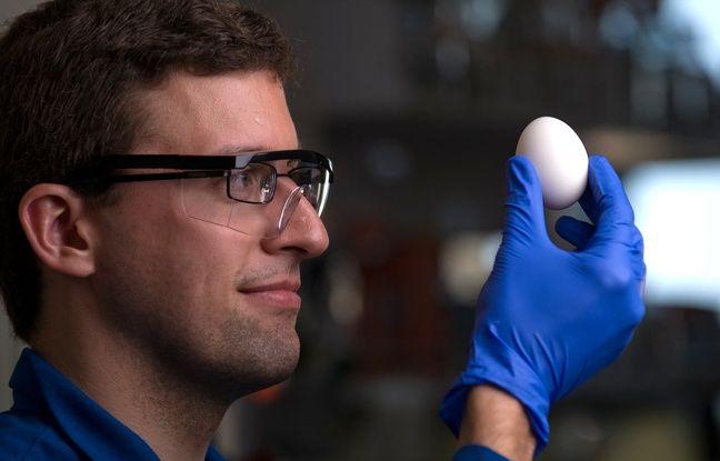 SCIENCE - Des chercheurs réussissent à «décuire» un œuf dur