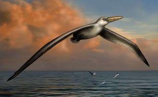 Vue d'artiste du plus grand oiseau ayant jamais volé, le Pelagornis sandersi.