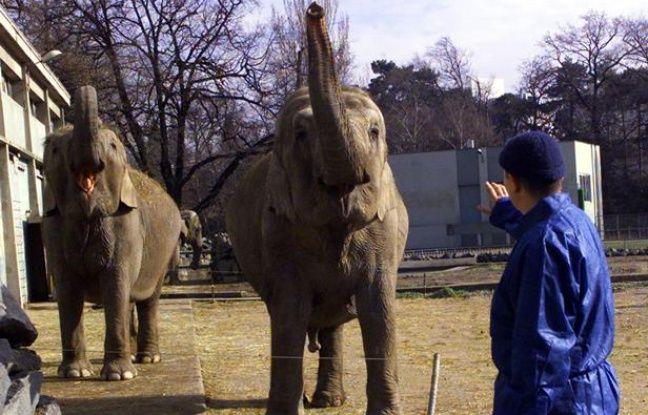 Des éléphants d'Asie au parc de la Tête d'or, à Lyon, en 2001.