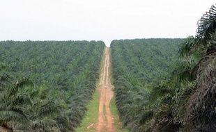 """Les producteurs africains d'huile de palme se mobilisent contre le """"dénigrement"""" visant cette culture, accusée de détruire les forêts et de menacer la santé humaine, s'inquiétant que le succès d'un label """"sans huile de palme"""" ne condamne à terme les planteurs."""