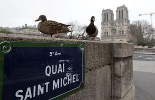 Des canards devant la cathédrale Notre-Dame pendant la crise du coronavirus, à Paris, France, le 20 mars 2020.
