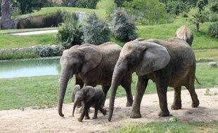 Makeba, encadré par sa mère Matibi, et son père, Pembe, est née le 24 mars au zoo de Plaisance-du-Touch.