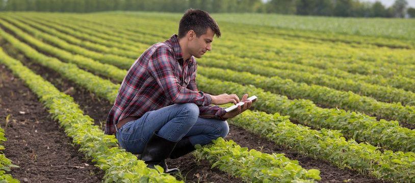 Plusieurs secteurs d'activité comme l'agriculture et l'aide à domicile sont en manque de main-d'œuvre.