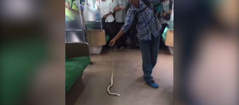 Il maîtrise un serpent dans le train - Le Rewind