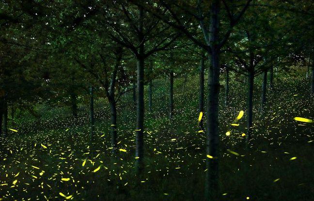 Rennes: Sur les bords de la Vilaine, les lucioles font peine à voir